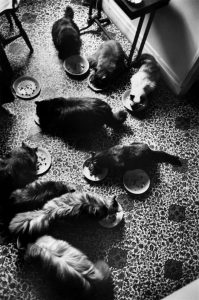 Leonor Fini's cats by Henri Cartier-Bresson, 1961