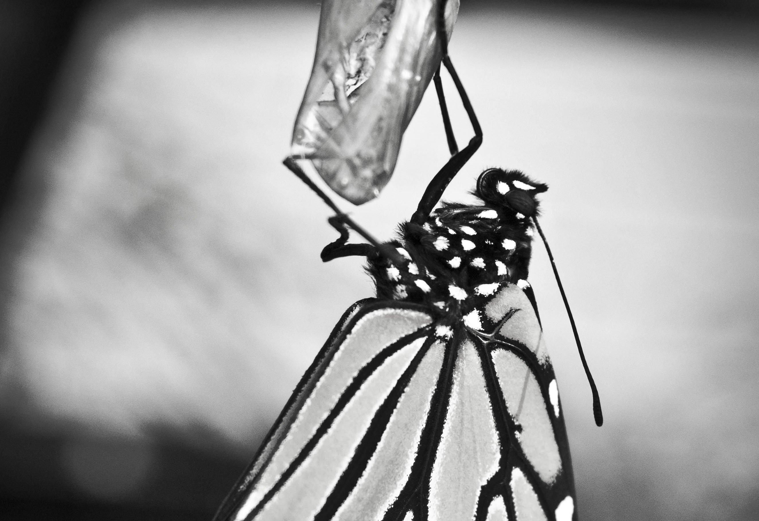 butterfly2dsc09646.jpg