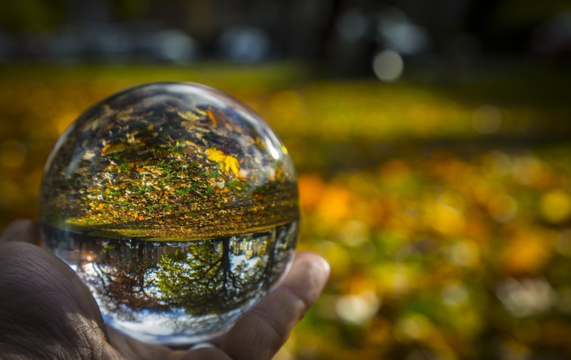 crystal-ball-and-autumn-1478526301v7Q.jpg